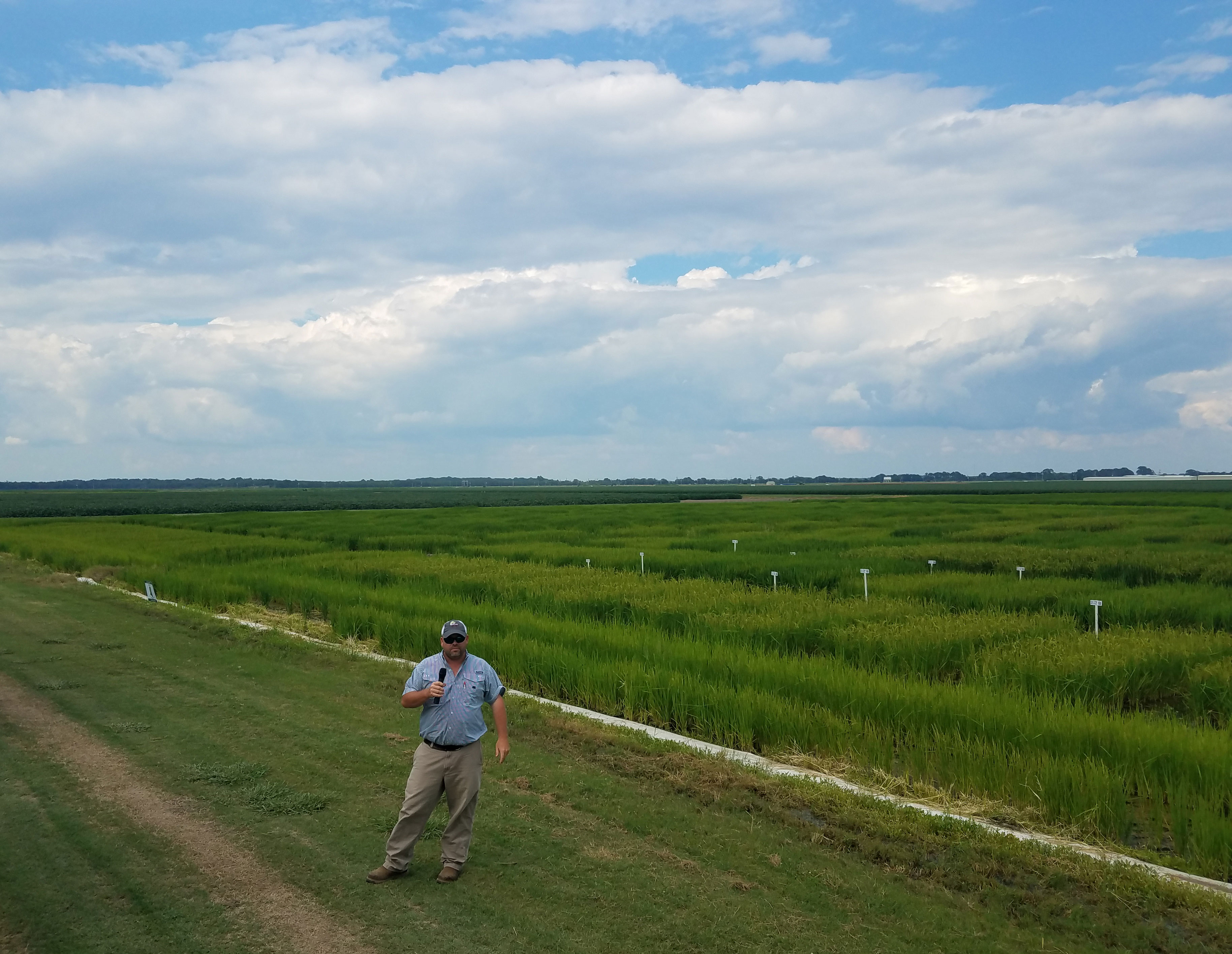 Researcher holding microphone next to rice research plot