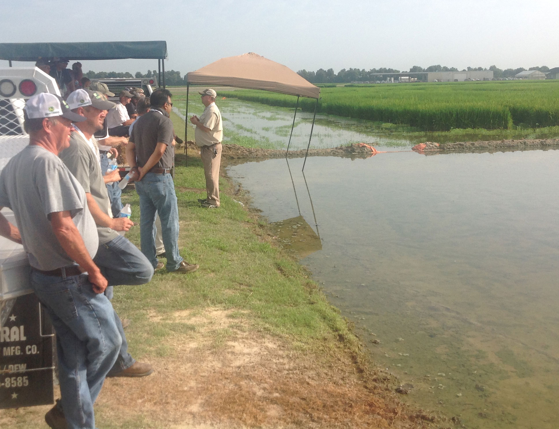 RiceTec-AR-Field-Day, attendees stand alongside research plots